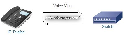 voice vlan mantigi